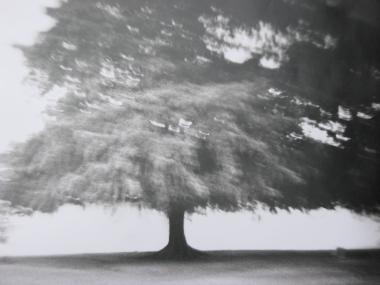 diana-tree.jpg