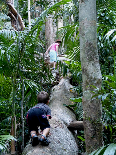a treeclimbing