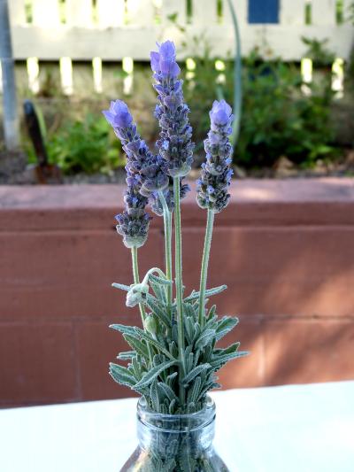 c lavender