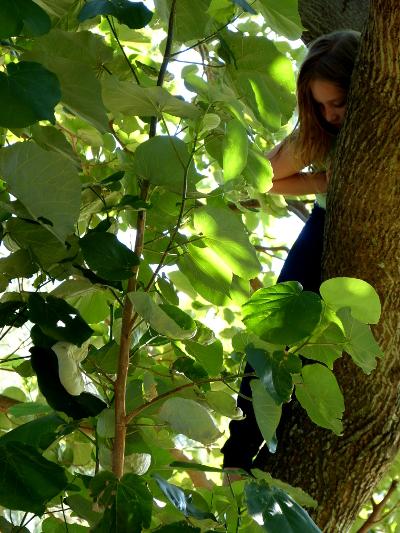 d treeclimb