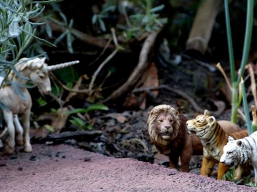 a animal garden2