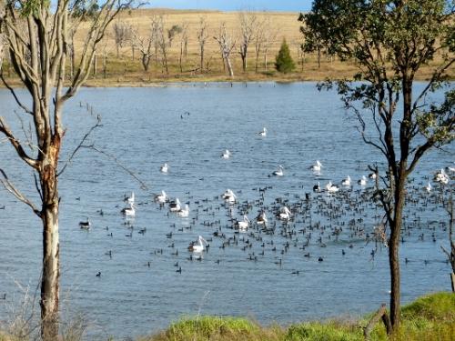 b water birds