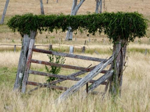 f gate