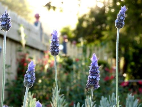h garden