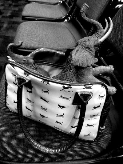 bb handbag