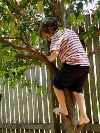 ab treeclimb