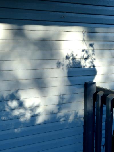 aa shadow